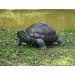 Bronzefiguren - Riesenschildkröte